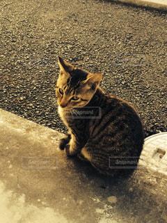猫の写真・画像素材[318200]