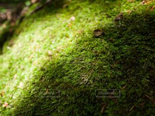 自然 - No.597894