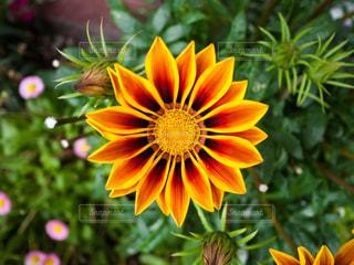 花の写真・画像素材[597900]