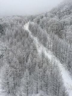 冬の写真・画像素材[318505]