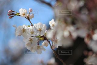 春の写真・画像素材[318830]