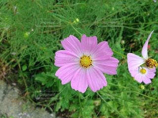 花の写真・画像素材[318563]