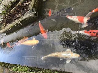 池の写真・画像素材[318571]