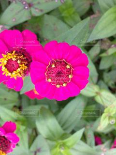 庭の写真・画像素材[318912]