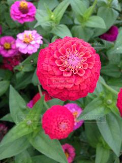 庭の写真・画像素材[318913]