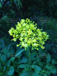 花の写真・画像素材[319753]