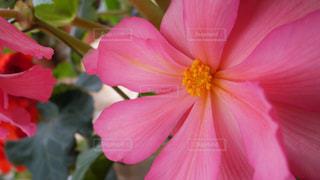 花の写真・画像素材[1005530]