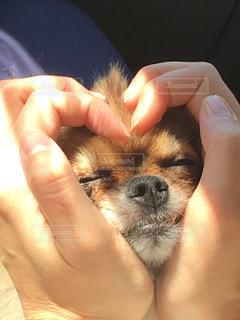 犬の写真・画像素材[318593]