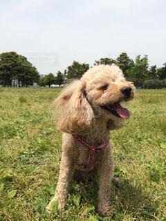 犬の写真・画像素材[318733]