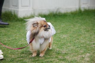犬の写真・画像素材[318735]