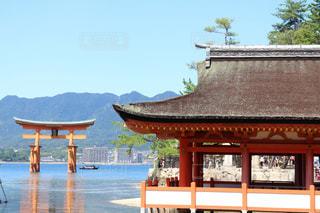 神社の写真・画像素材[320890]