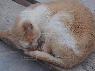 猫の写真・画像素材[320057]