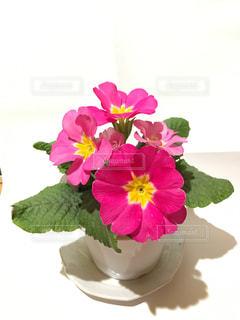 花の写真・画像素材[318866]