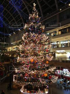 クリスマスツリーの写真・画像素材[318637]