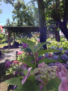 花の写真・画像素材[318704]