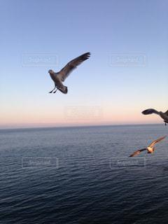 海の写真・画像素材[319646]