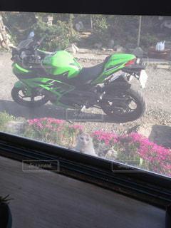 緑の写真・画像素材[319655]