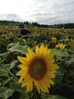 花の写真・画像素材[325990]
