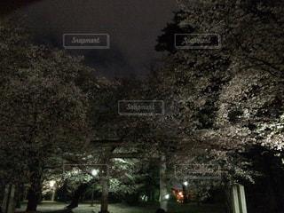 屋外の写真・画像素材[426303]