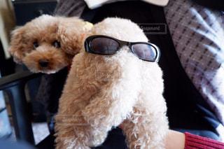 犬の写真・画像素材[338969]