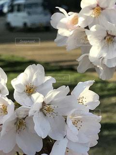花 - No.458121
