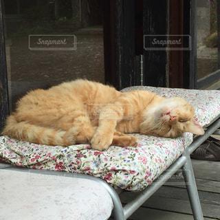 猫の写真・画像素材[333983]