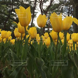 黄色の写真・画像素材[463467]