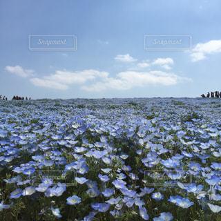 青空の写真・画像素材[463491]