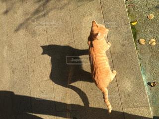 敷物の上に座っている猫の写真・画像素材[1014666]
