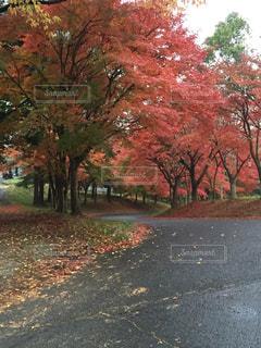 秋色の里山の写真・画像素材[1014670]