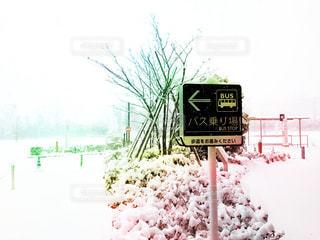 積雪の写真・画像素材[318982]