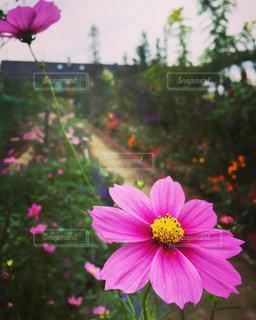 花の写真・画像素材[318910]
