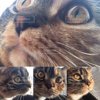 猫 - No.319082