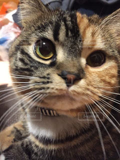 猫の写真・画像素材[319083]