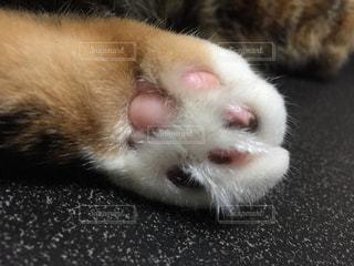 猫の写真・画像素材[319084]