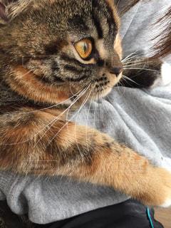 猫の写真・画像素材[319086]