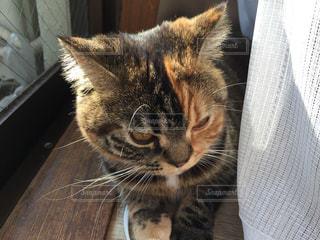 猫の写真・画像素材[319087]