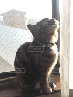 猫の写真・画像素材[319088]
