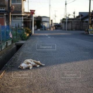 猫の写真・画像素材[3088]