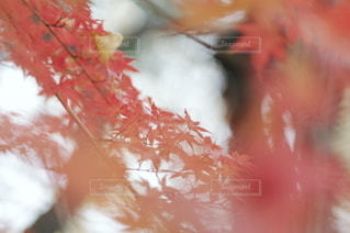自然の写真・画像素材[3066]