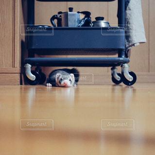 木製テーブルの上に座っている猫の写真・画像素材[1142923]