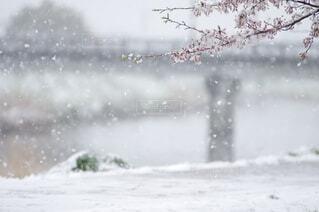 雪に覆われた畑の写真・画像素材[4226021]