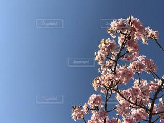 空の写真・画像素材[360683]