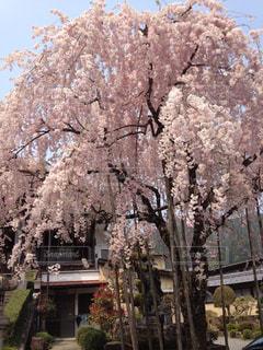 春の写真・画像素材[319759]