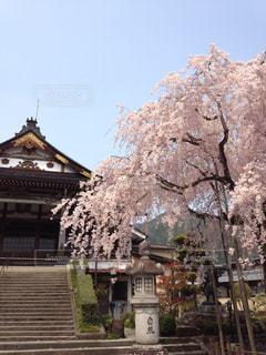 春の写真・画像素材[319761]