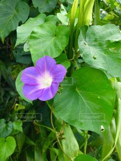 花の写真・画像素材[378184]