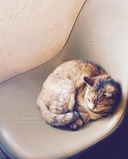 猫の写真・画像素材[378186]