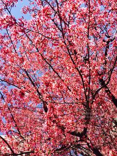 花の写真・画像素材[397854]