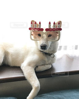 犬の写真・画像素材[319795]