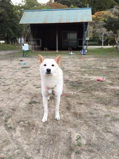 No.319796 犬